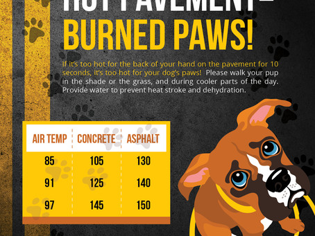 Hot Pavement = Burned Paws