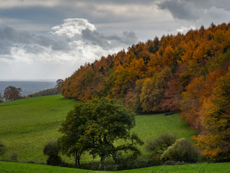 Enjoying the colours of autumn