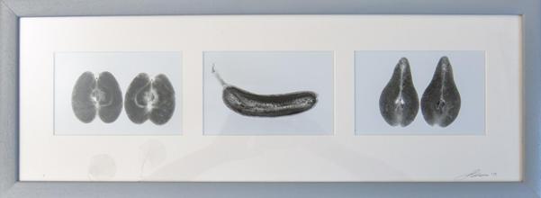Sliced Fruit - A framed triplet of paper negatives