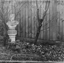 Test _Garden_new_Plates_ISO2_Photo-1.jpg