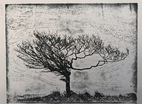 Progress with etching – Exmoor tree project