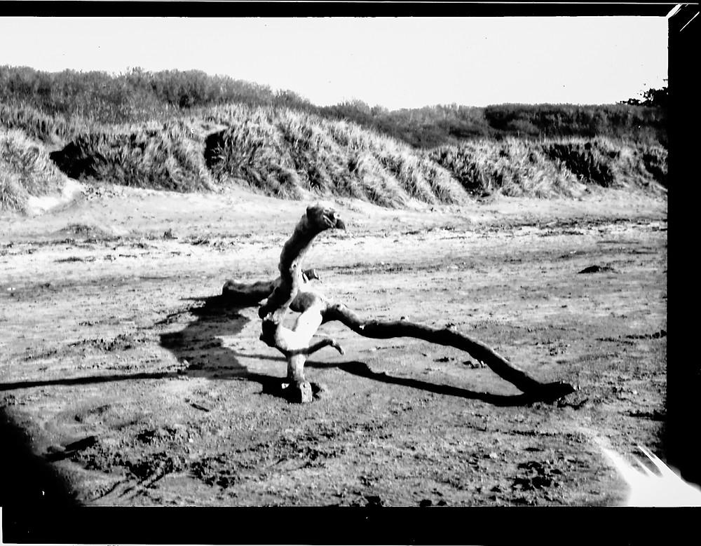 burnham driftwood-1