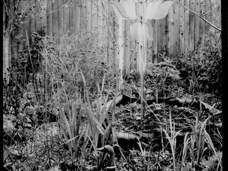 100 year-old camera's photo of my garden