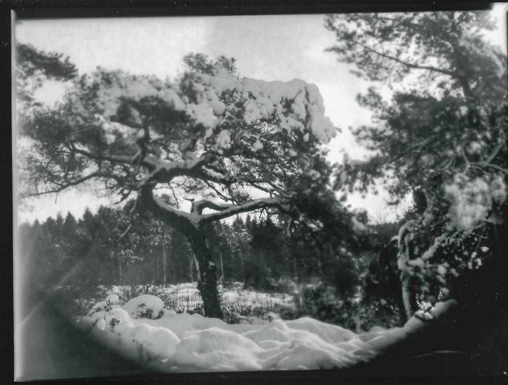 Mendip-Snow-ThorntonPickard-WP-1