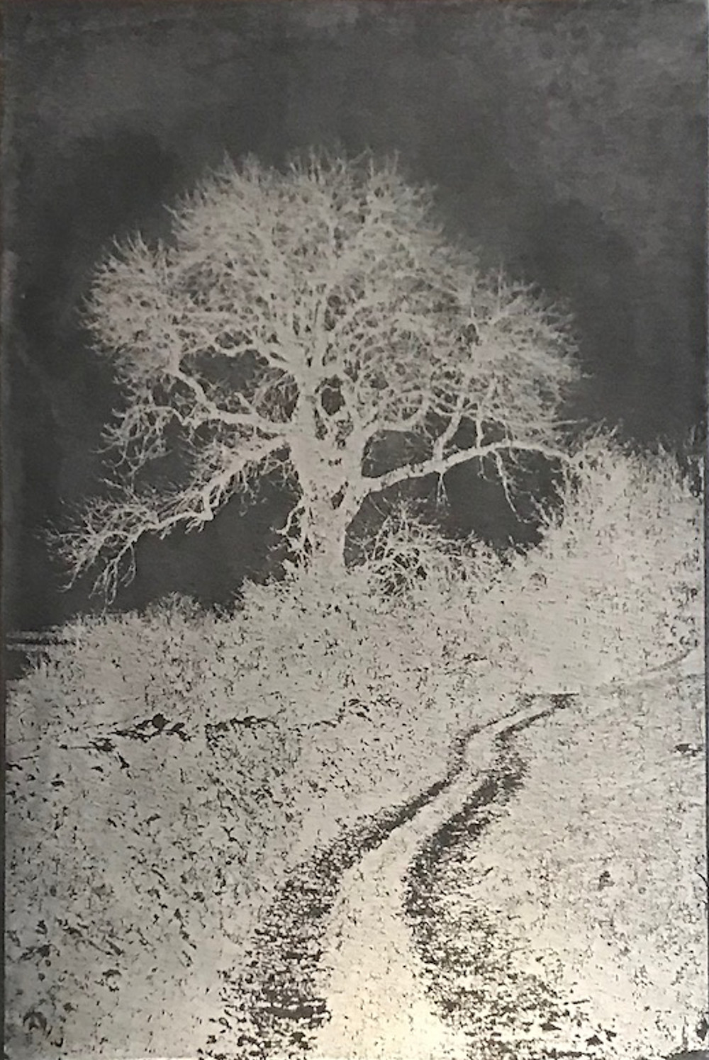 etched-plate-wharfdaletree_jan2019-7994