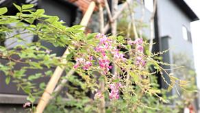 鳥海石ってなに?秋庭をオシャレに飾る天然石の魅力とは…
