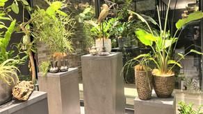 観葉植物お悩み相談室③「病害虫の駆除作業で気を付ける5つのポイント」