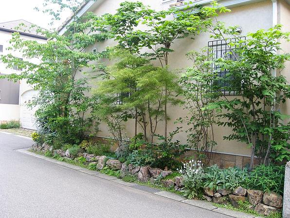8木を植える1.JPG