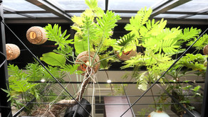 観葉植物お悩み相談室②                                                            「害虫5種類の特徴&おすすめの薬剤を大公開」