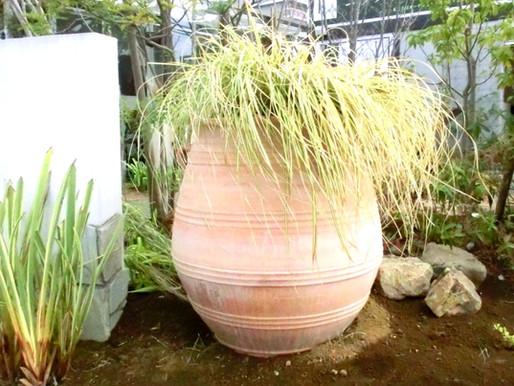 今、世界でも注目されているグラス植物の楽しみ方