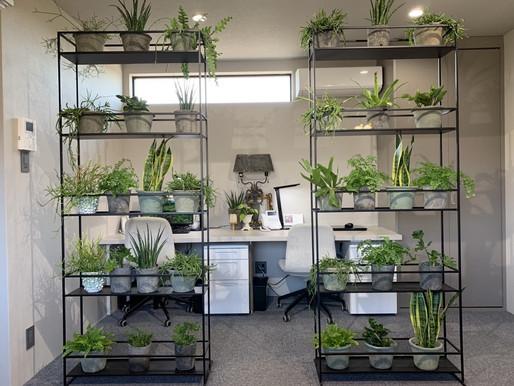 植物のパーテーション