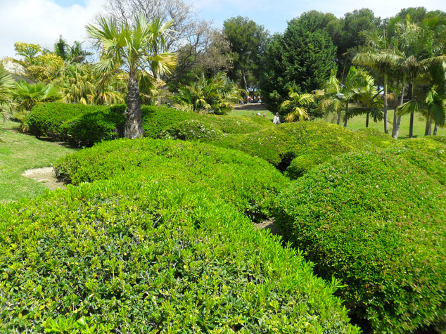 Drought Tolerant Hedging & Shrubs