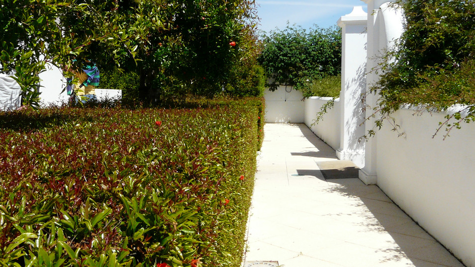 Punica granatum var. nana - wide low hed