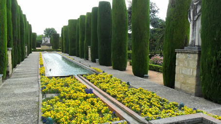 An avenue of dark clipped conifers contrasts with the temporary bright colours of the annual Pansy flowers.