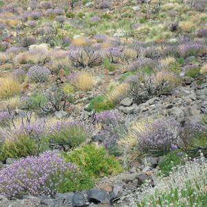 Spring flowering shrubs