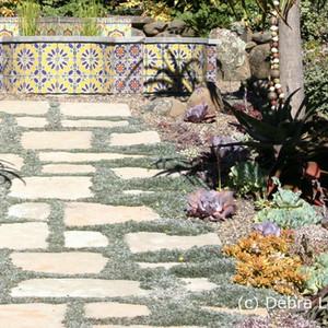 Dymondia margaretae in between paving