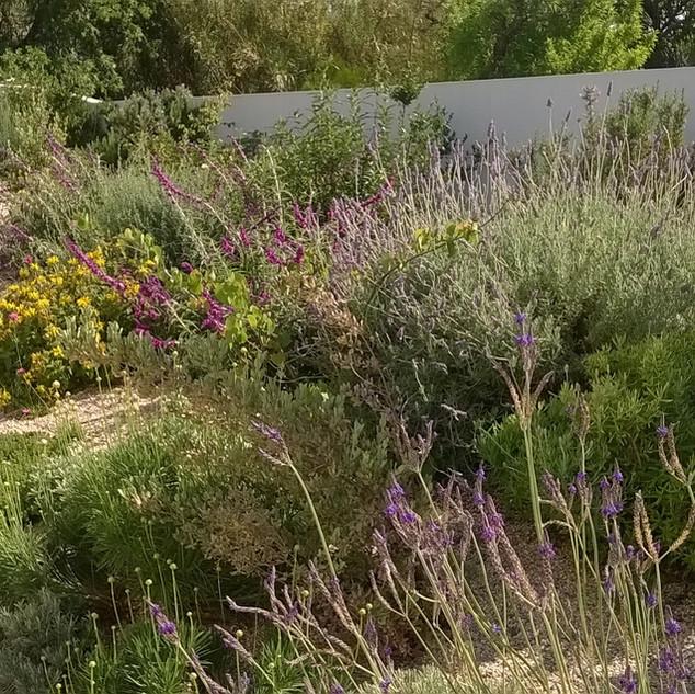Mixed border planting