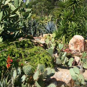 Opuntias, Yuccas, Cereus and Aloes.