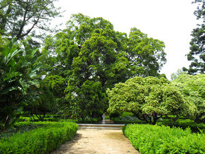 Mature trees and Buxus hedges