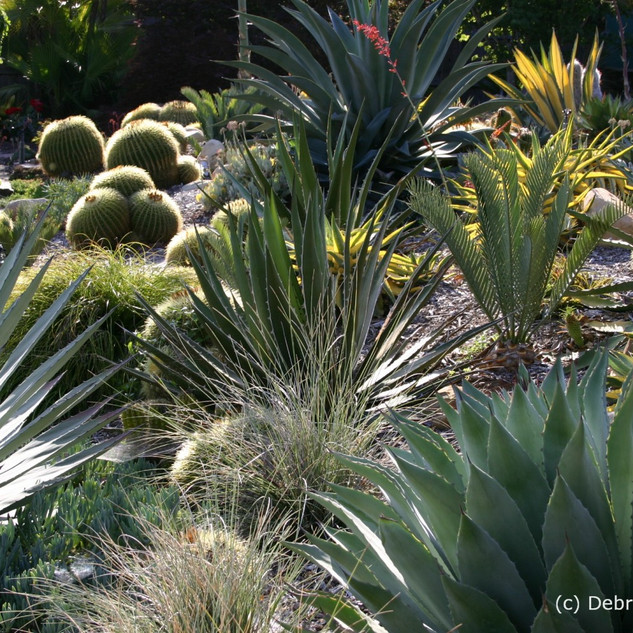Agaves, Cycad, Cactus and grass.