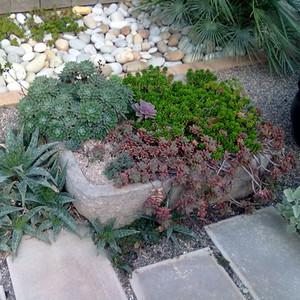 Echeveria pilosa, Sedum rubrotinctum, Aloe maculata and Graptosedum 'Bronze'