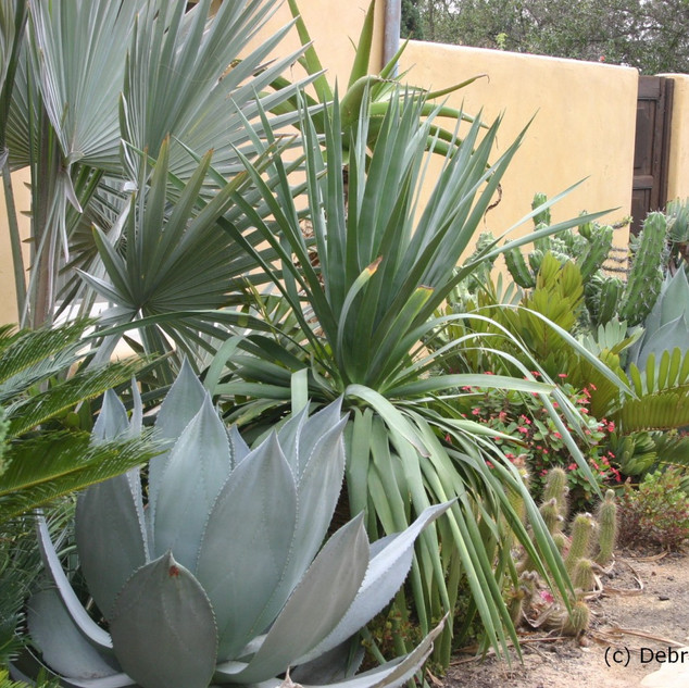 Mixed border of architectural plants. Conifers, Palms, Cycad, Aloe, Dracaena.