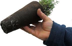 Fibre pot showing root penetration