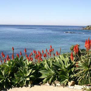 Aloe arborescens and Agave attenuata.