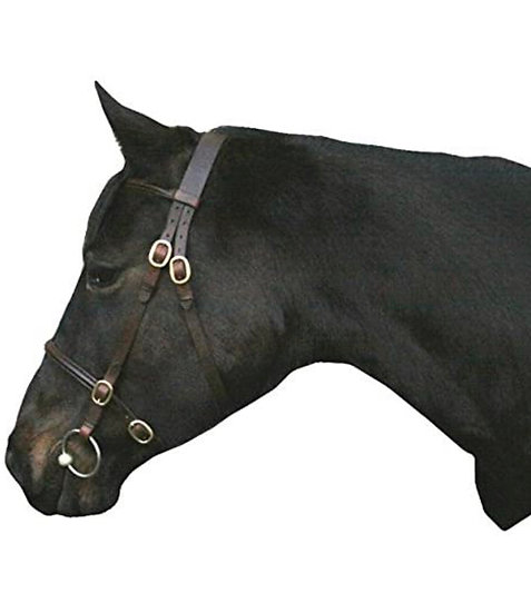 In-hand Showing Bridle