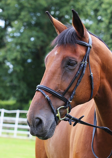 Gallop EC23 Padded Bridle
