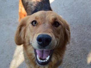 Newsletter 5 | Dog Shelter News