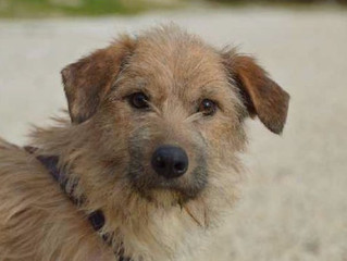 Newsletter 4 | Dog Shelter News