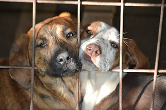 dogs-shelter-rescue-montenegro