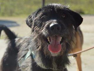 Newsletter 1 |  Dog Shelter News