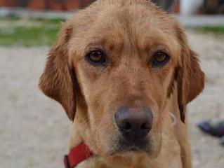 Newsletter 3 | Dog Shelter News