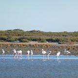 カマルグ湿地帯.png