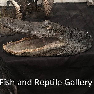 Fish and Reptile Gallery