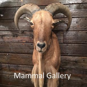 Mammal Gallery