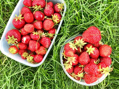 Food Facts - Aardbeien