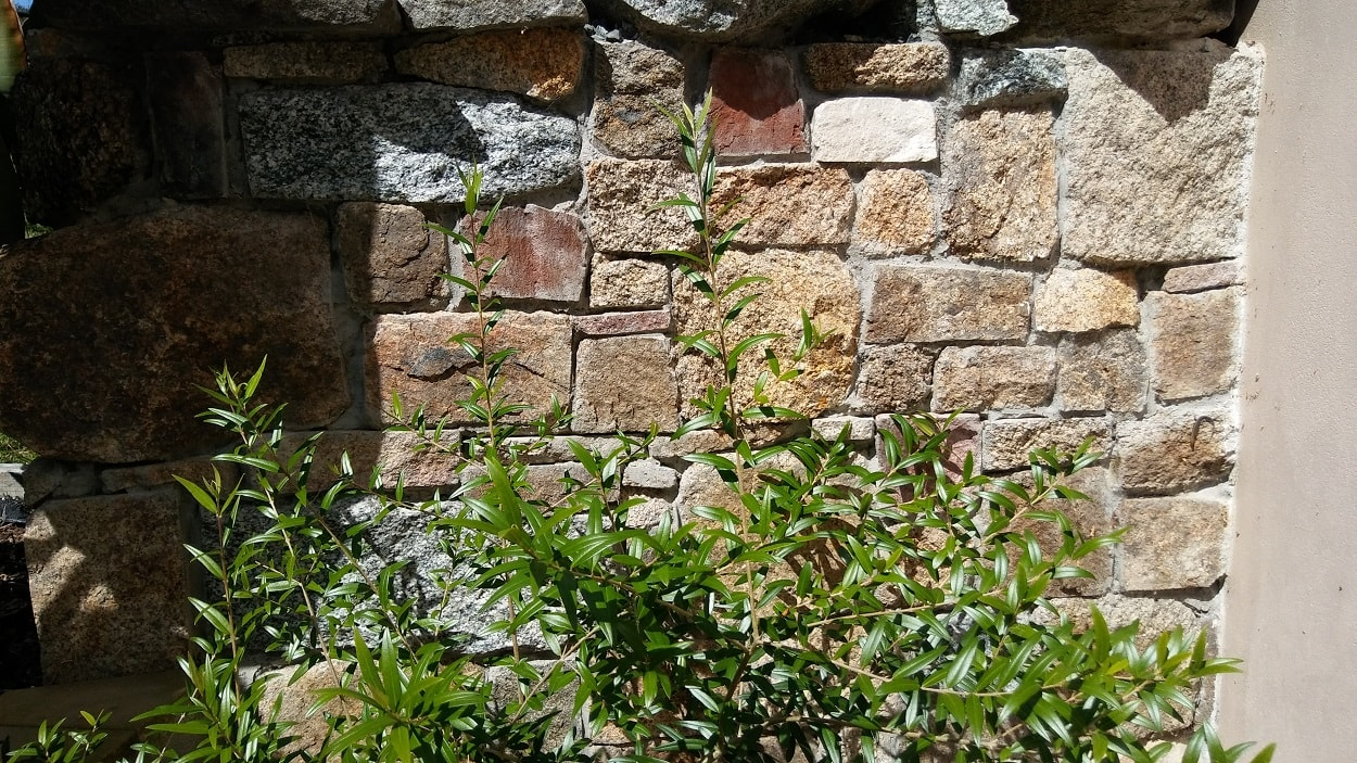 Stone feature wall in Moruya NSW
