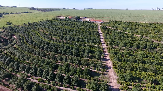 Fazenda Retiro - Macadamia