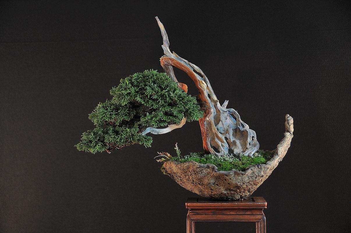 Tsukumo Cypress