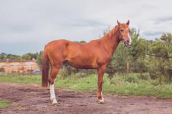 Пародистый конь