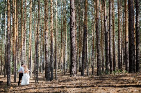 Прогулка по сосновому лесу. Жених и невеста.