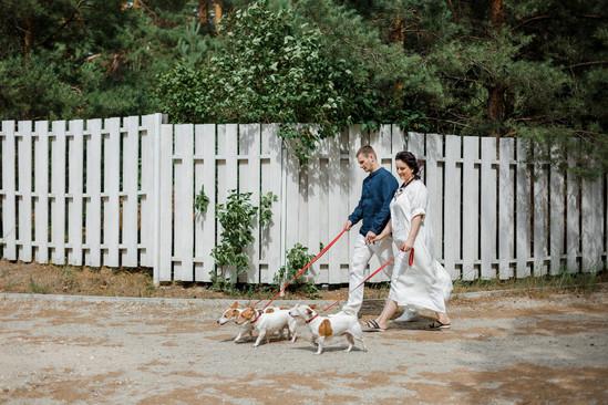 Собаки на свадебной прогулке