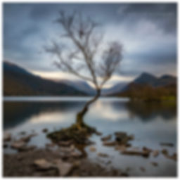 Llanberis Tree, Snowdonia.