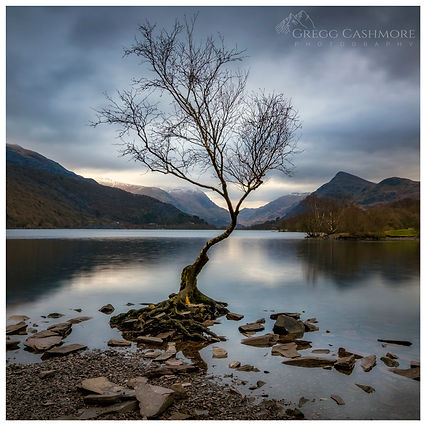 Llanberis Tree, Snowdonia.