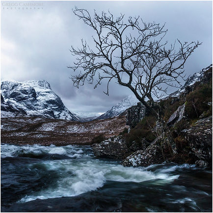 RIVER COE LONE TREE.jpg