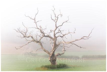 Devon Tree