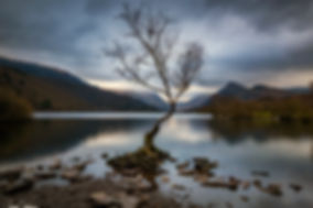 LLANBERIS LONE TREE